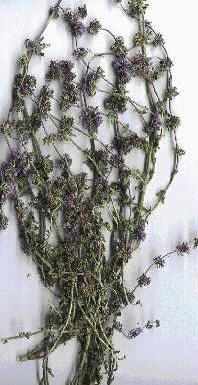 Βότανα και φαρμακευτικά φυτά του
